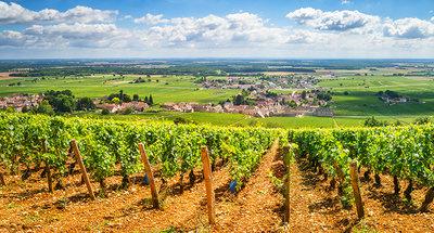Vineyards of Burgundy